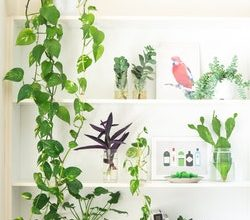 Photo of From the Inside: How to help indoor plants grow properly